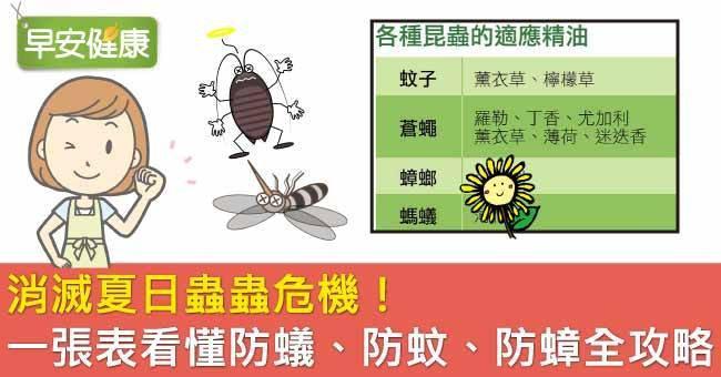消滅夏日蟲蟲危機!一張表看懂防蟻、防蚊、防蟑全攻略