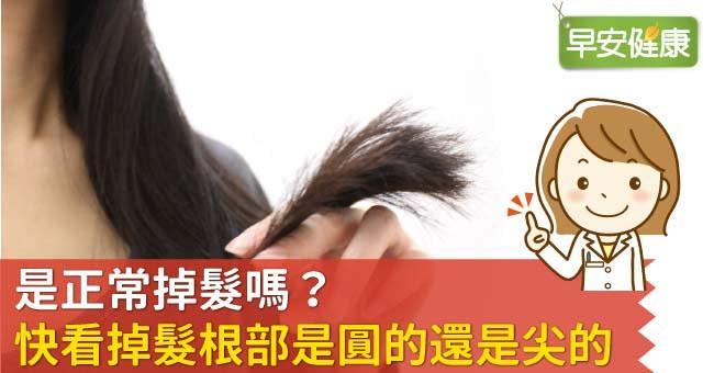 是正常掉髮嗎?快看掉髮根部是圓的還是尖的