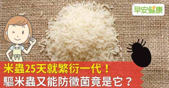 米蟲25天就繁衍一代!驅米蟲又能防黴菌竟是它?