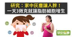研究:家中灰塵讓人胖!一天3微克就讓脂肪細胞增生