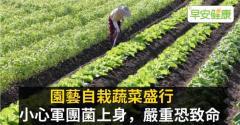 園藝自栽蔬菜盛行,小心軍團菌上身,嚴重恐致命